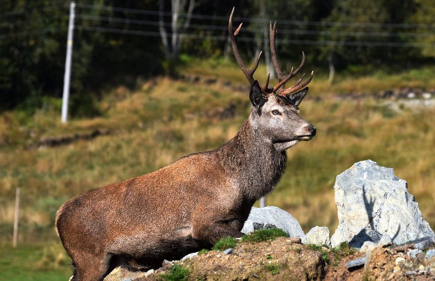Nave Deer farm